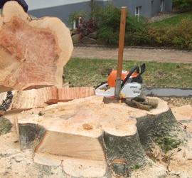 Ein abgeholzter Baum in Schönberg