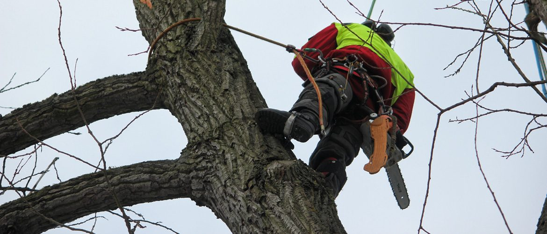 Ein Baumkletterer bei der Arbeit