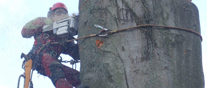 Unsere geschulten Baumkletterer wissen was sie tun
