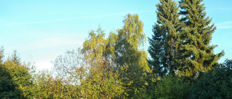 Die Pflege von Bäumen ist unser Spezialgebiet